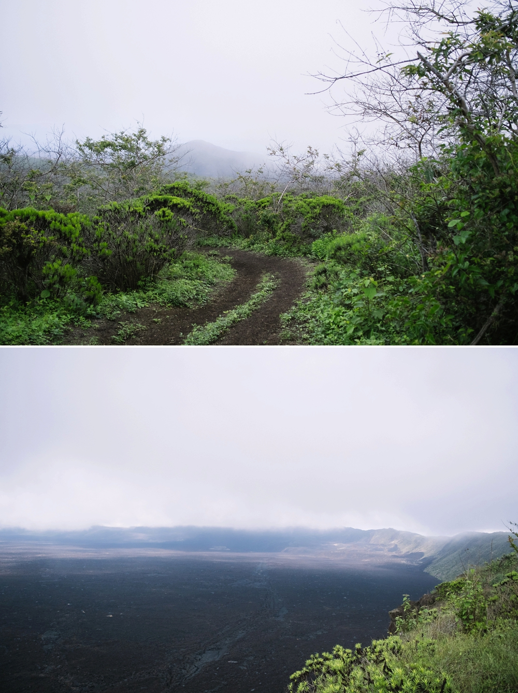 Isabela Island, Galapagos, Ecuador