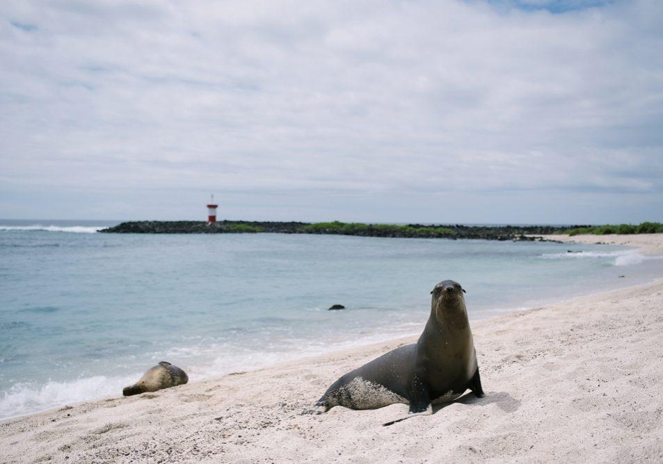 San Cristobal Galapagos Ecuador Coco Betty Travels
